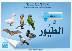 THE BIRDS IN ARABIC