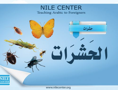 Insect in Arabic